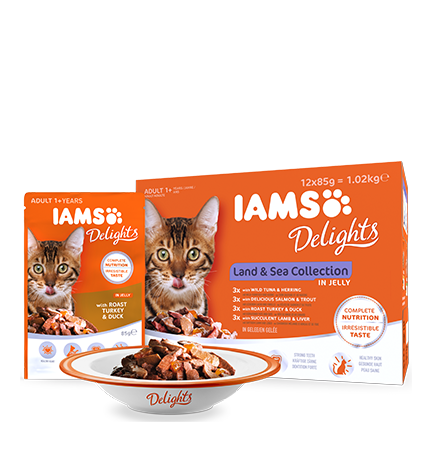 IAMS Delights Land & Sea Collection in Jelly